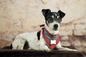 Honden fotograaf Limburg | kleine honden | grote honden | foto van hond