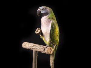 Vogel fotograaf Limburg | dieren fotograaf | alle vogels | studio fotografie