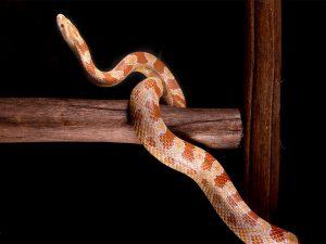 Dieren fotograaf Limburg | slangen | studio | reptielen