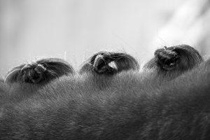 Paarden fotograaf Limburg | details